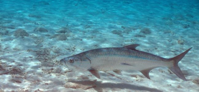 beaucoup de poissons datant service numéro de téléphone meilleur site de rencontres Phoenix