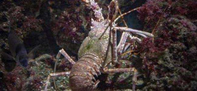 La pêche du homard au casier