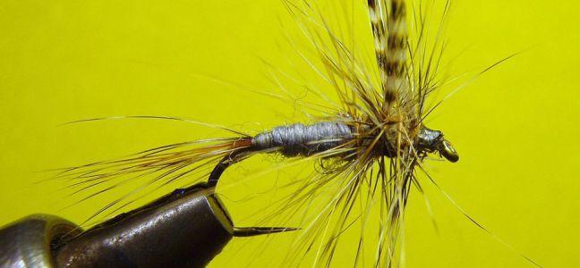 Conseils sur le matériel pour pêcher le mulet à la mouche