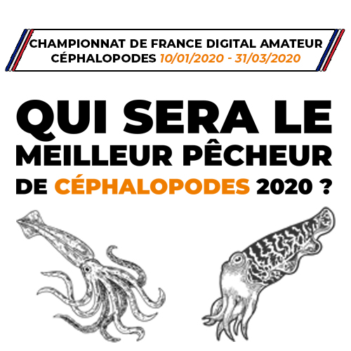 CHAMPIONNAT DE FRANCE DIGITAL AMATEUR CÉPHALOPODES